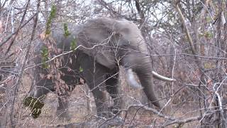 Horn's Africa Safari Showreel 2019