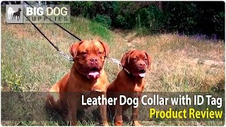 Dogue De Bordeaux And Other Canines Wearing Leather Dog Collar