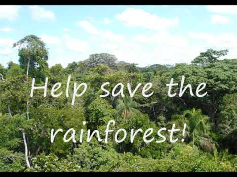 Rainforests: Important and Threatened - YouTube