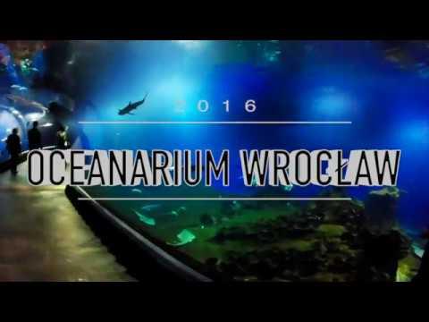 oceanarium 2016 wroclaw
