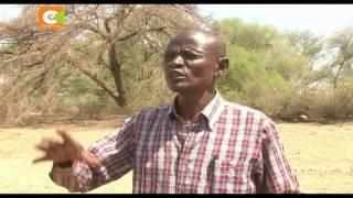 Inadaiwa mti ulikauka baada ya kulaaniwa na wazee, Kapedo