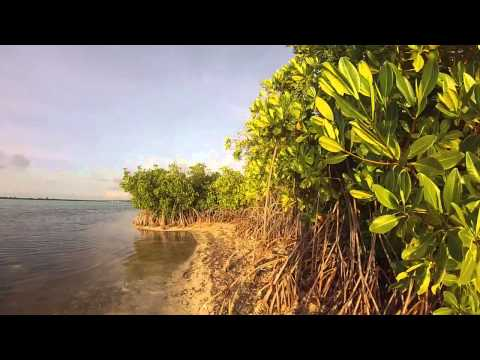 Little Cayman, Owens Island, Cayman Brac | Gopro Cayman