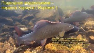 видео Рыбалка статьи другие