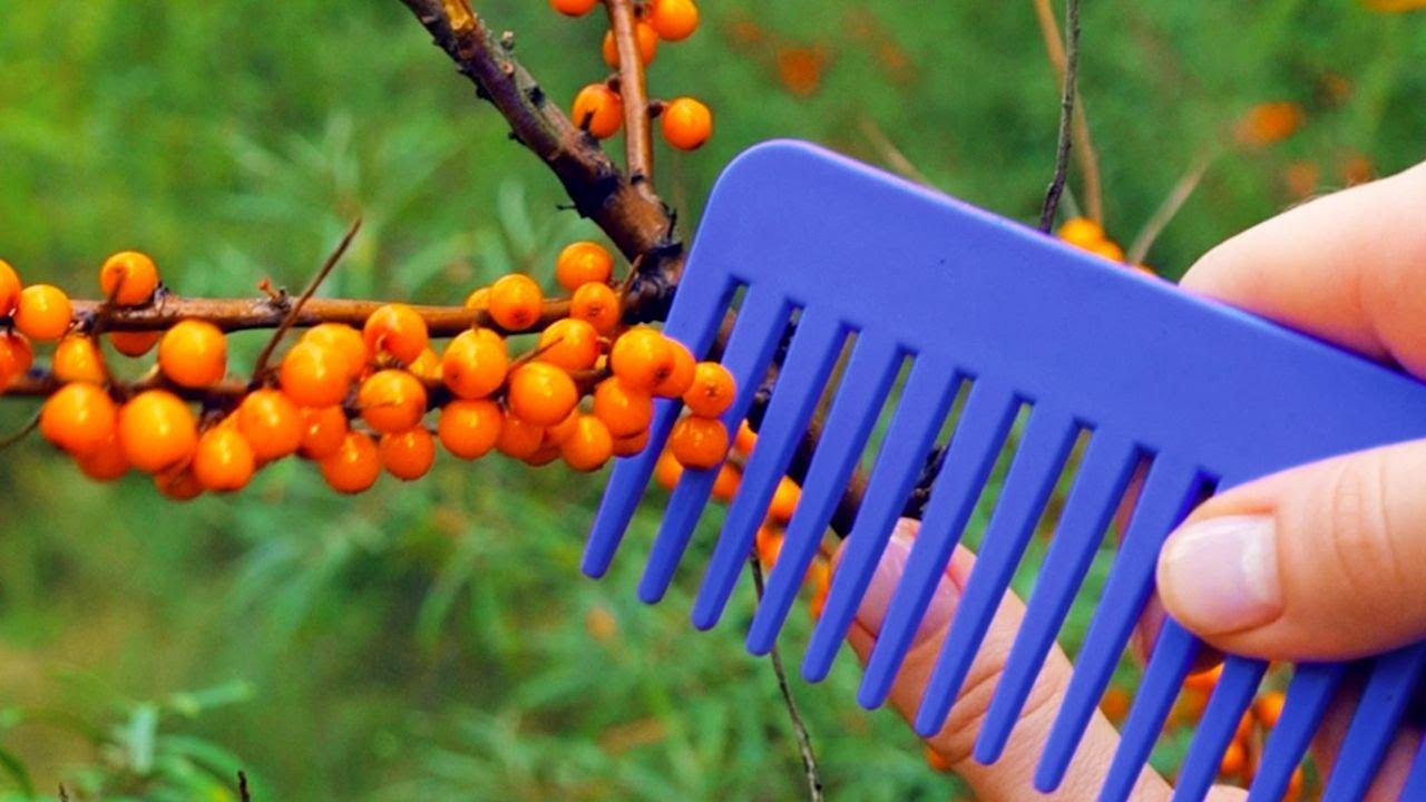 Download 25 SMART GARDENING AND PLANT HACKS