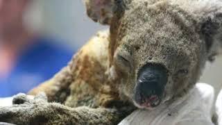 Pray For Australia Australia Is On Fire #PrayForAustralia