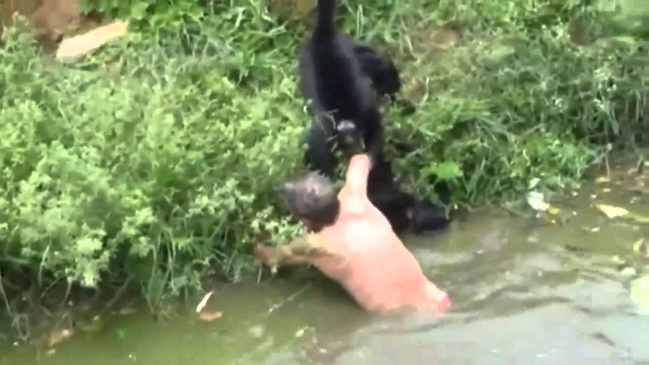 Dog Bite Monkey