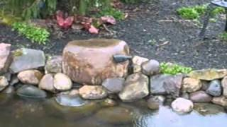 How to locate a leak in a pond part 1