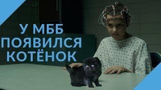[rus sub] Новый котёнок Милли Бобби Браун   Instagram Live 01.04.2018