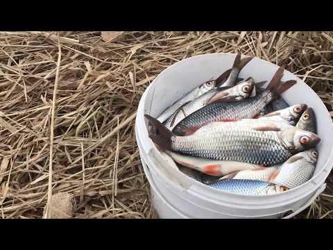 Ловля плотвы на малой реке весной