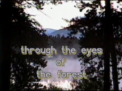 Through the Eyes of the Forest