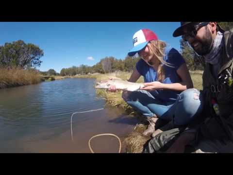Fly Fishing Silver Creek, AZ