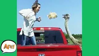 Safari Parks GONE WILD! 😂 | Funny Animal Fails | AFV 2021