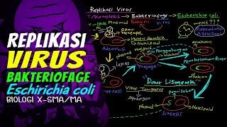 REPLIKASI VIRUS-Bakteriofage [Eschirichia coli]-Biologi X-SMA_MA-REMURI-Refi MR