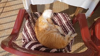 Living Like This Cat Could Be The Secret To Happiness