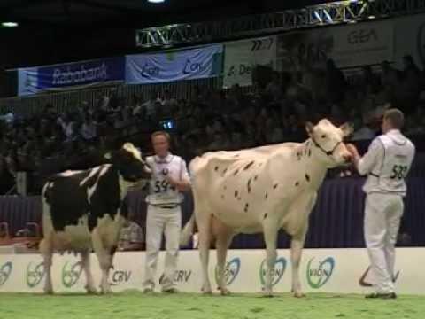 Holstein Master Sale Nr. 10