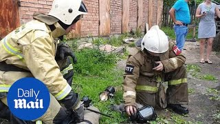 Firefighters resuscitate cat after rescuing it from burning building