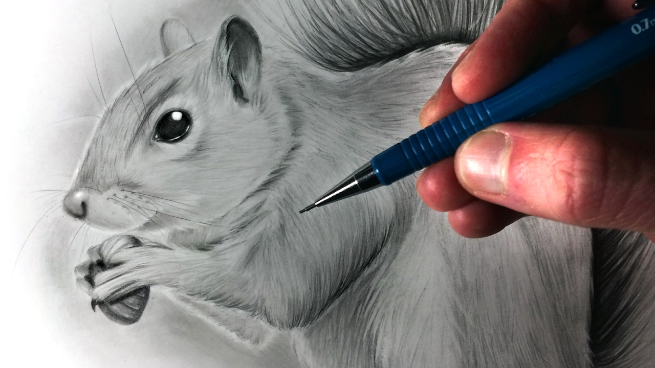 Uncategorized How To Draw A Realistic Squirrel how to draw a squirrel youtube