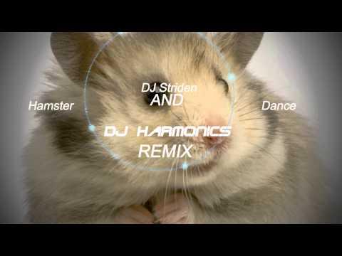 The Hampster Dance - (DJ Harmonics & DJ Striden Remix)