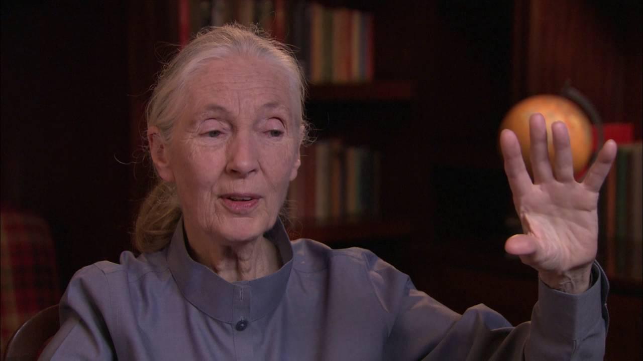 54bedde5e Dame Jane Goodall | Academy of Achievement