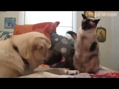 Cat vs Dog | added Sound effects by: @thewrightvisions