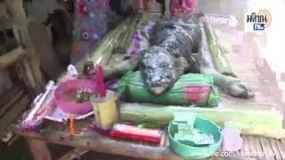 Chuyện Lạ Có Thật Trên Thế Giới   Rợn tóc gáy với sinh vật lai kỳ dị ở Thái Lan