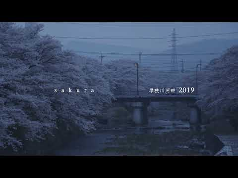 sakura-厚狭川2019