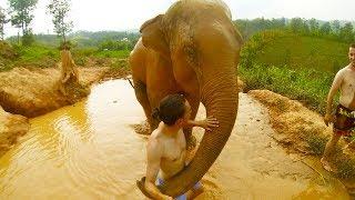 Adventure in Chiang Mai (Cooking Class, Jungle Trekking & Elephant Camp)
