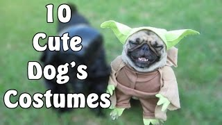 Top 10 Pugs in Awesome Costumes
