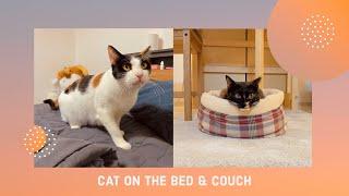 침대냥 애옹과 쿠션캣 라라 = 매우 사랑스러운 고양이