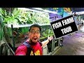 QIAN HU FISH FARM TOUR! Mega huge!!!