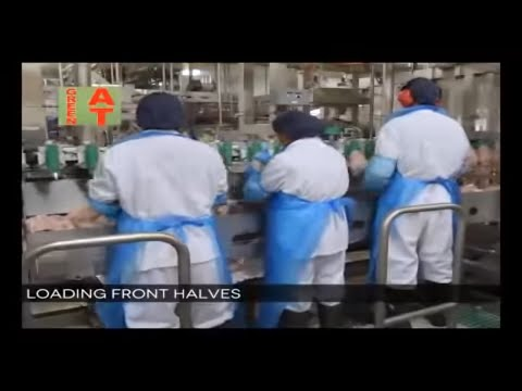 World Modern Farming and Automatic Poultry Processing on Smart Technology-Meyn,