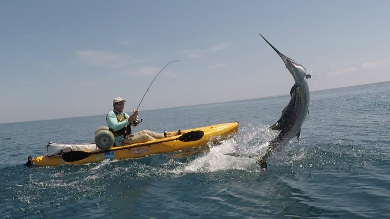 Offs Kayak Fishing Palm Beach In Your Face Sailfish