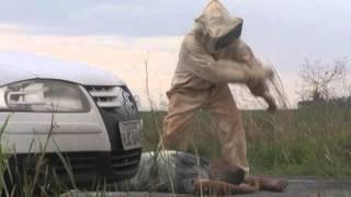 Caminhão tomba e motorista é atacado por abelhas próximo, a Alto Taquari – MT