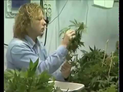 Culture Indoor Cannabis Fabrication D 39 Une Chambre De Culture 2 3 Youtube