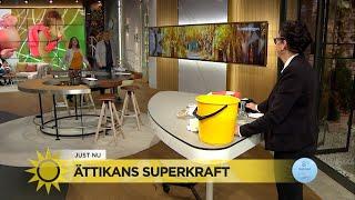 Marlene visar upp ättikans superkraft - Nyhetsmorgon (TV4)