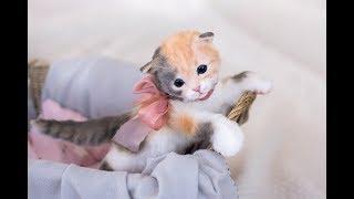 Почти живая игрушка - котенок Молли