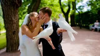 Почему на свадьбе кричат горько?