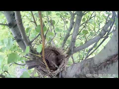 Wyze Cam Outdoor - Bird