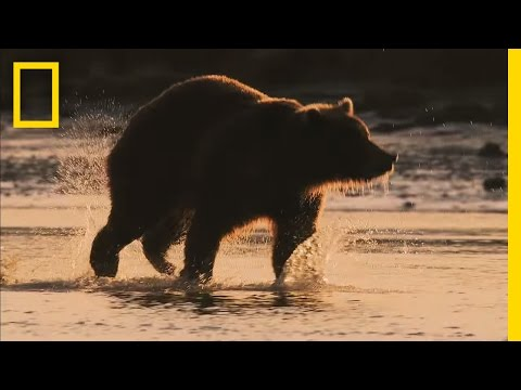 Grizz Quiz: How Much Do You Know About Grizzly Bears? | Short Film Showcase