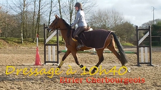 TRAVAIL DE L'IMPULSION - Dressage - 10h40 - Etrier Cherbourgeois