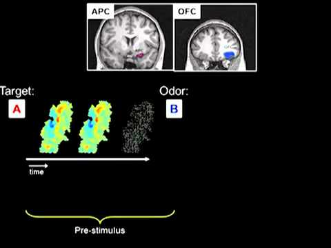 Sniffing out the Brain's Predictive Power