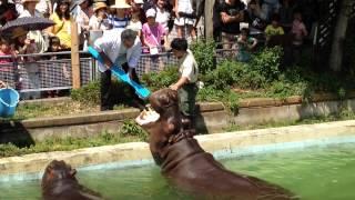 6月4日の歯の衛生週間にちなんで、6月1日にカバの歯磨きイベントを開催...