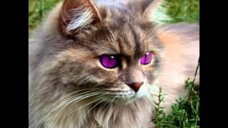 самые опасные коты
