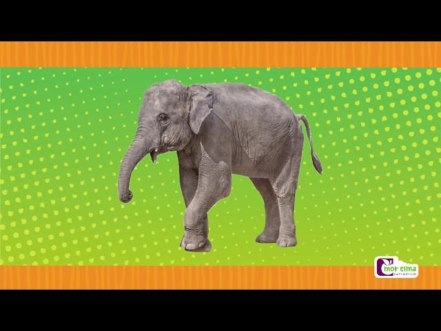 Hayvan Sesleri - Okul Öncesi Eğitim