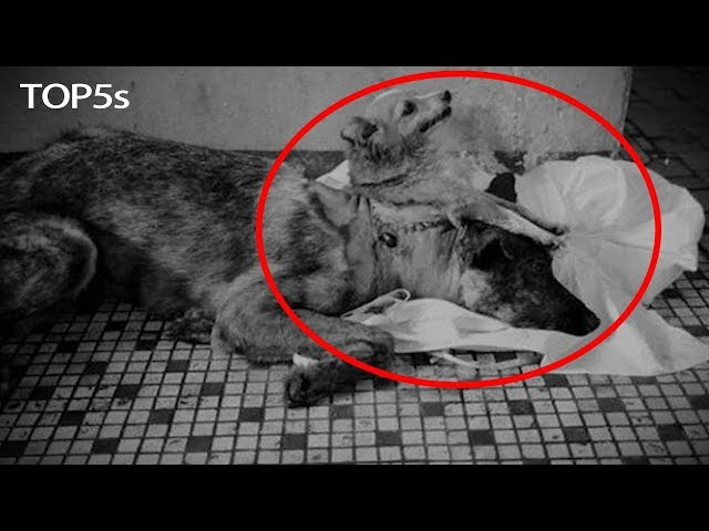 5 TRULY Insane Lab Created Hybrids & Animal Experiments...