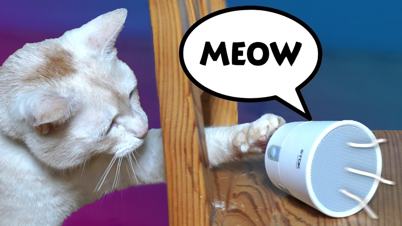 PRANK! ? Cat REACTS to sounds of OTHER CATS ?? *crazy*