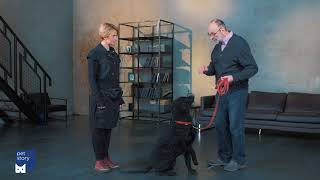 """Как научить собаку команде """"Ко мне""""?"""