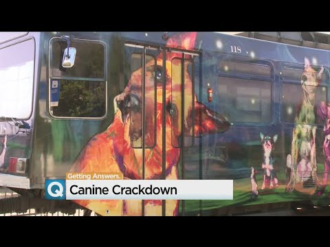 Sacramento RT Draws Line On Certain Pets On Trains, Buses