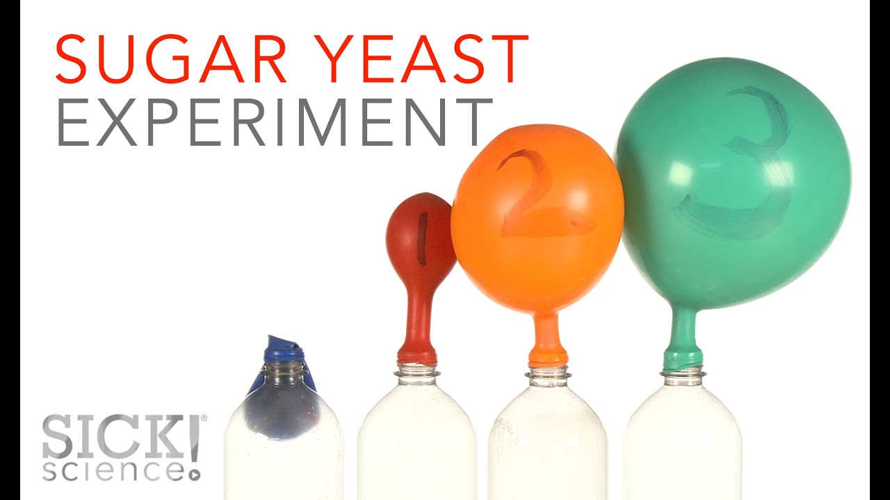 effect of different sugars on yeast fermentation