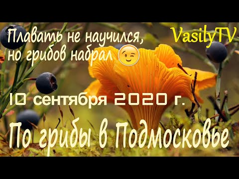 По грибы в Подмосковье 10 сентября 2020 г. Плавать не научился, но грибов набрал